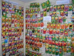 Срок годности семян: перца, помидор, баклажан и других овощных культур и цветов
